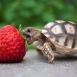 Turtle-Optimism1-e1346102503809